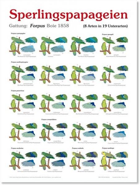 Poster Sperlingspapageien 800x600 XL-Format auf Hochglanzpapier