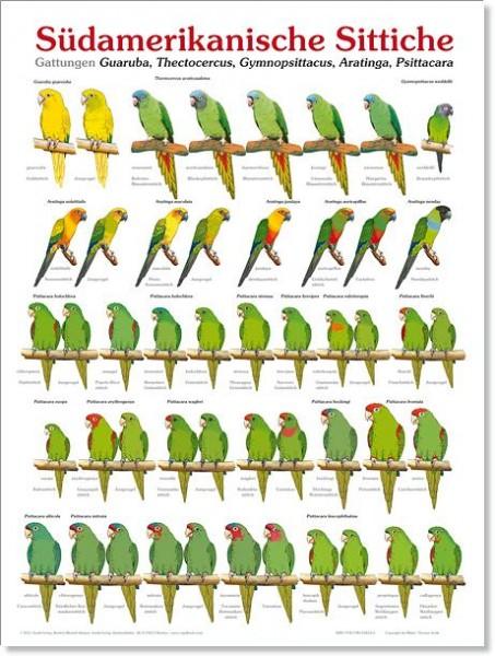 Poster Südamerikanische Sittiche (Ausgabe 1) 800x600 XL-Format auf Hochglanzpapier
