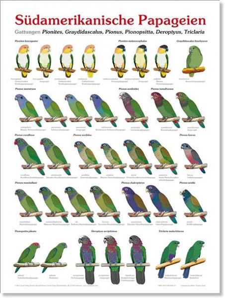Poster Südamerikanische Papageien 800x600 XL-Format auf Hochglanzpapier