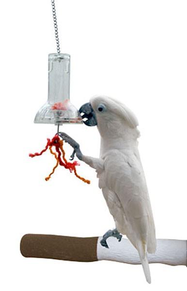 GLOCKEN-FUTTOMAT für clevere Papageien