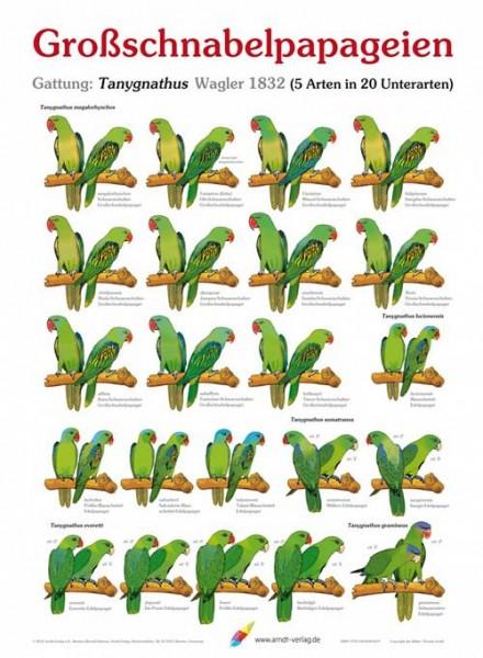 Poster Großschnabelpapageien 800x600 XL-Format auf Hochglanzpapier