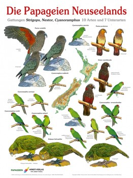 Poster Papageien Neuseeland 800x600 XL-Format auf Hochglanzpapier