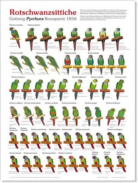 Poster Rotschwanzsittiche 800x600 XL-Format auf Hochglanzpapier