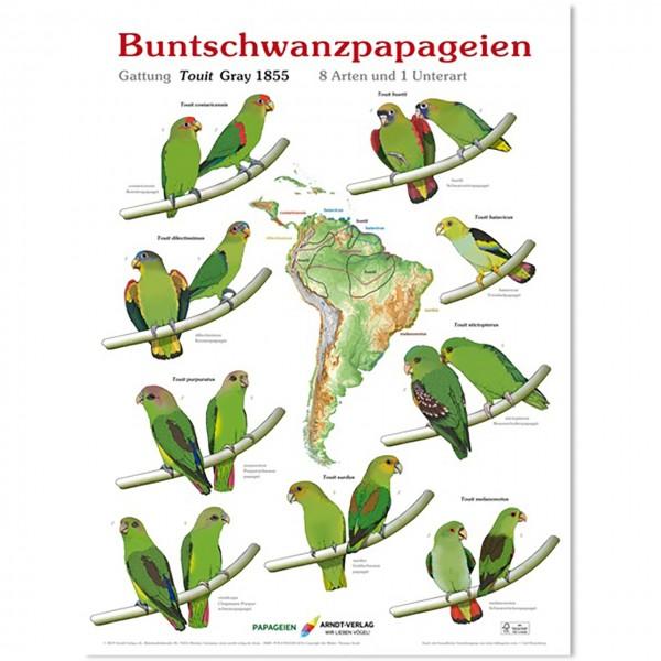 Poster Buntschwanzpapageien 800 x 600mm