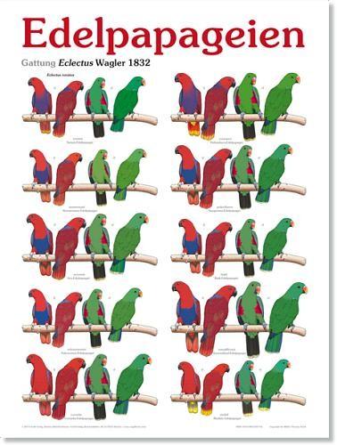 Poster Edelpapageien 800x600 XL-Format auf Hochglanzpapier