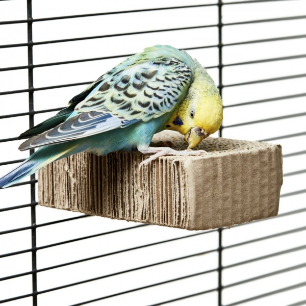 Sitzbrett aus Wellpappe für Wellensittiche & kleine Papageien