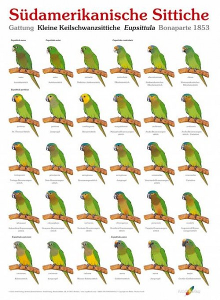 Poster Südamerikanische Sittiche (Ausgabe 2) 800x600 XL-Format auf Hochglanzpapier