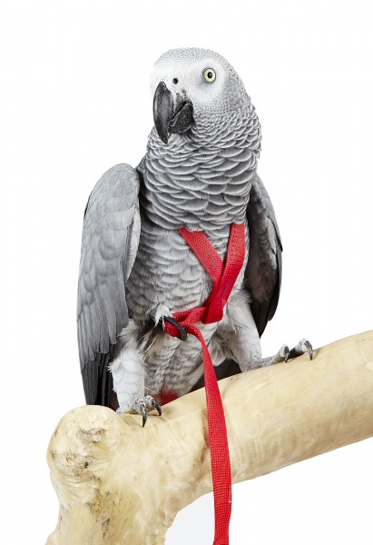 Fluggeschirr Adventure Bird Harness X-SMALL