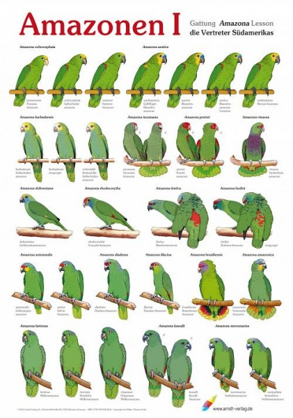 Poster Amazonen 1 800x600 XL-Format auf Hochglanzpapier