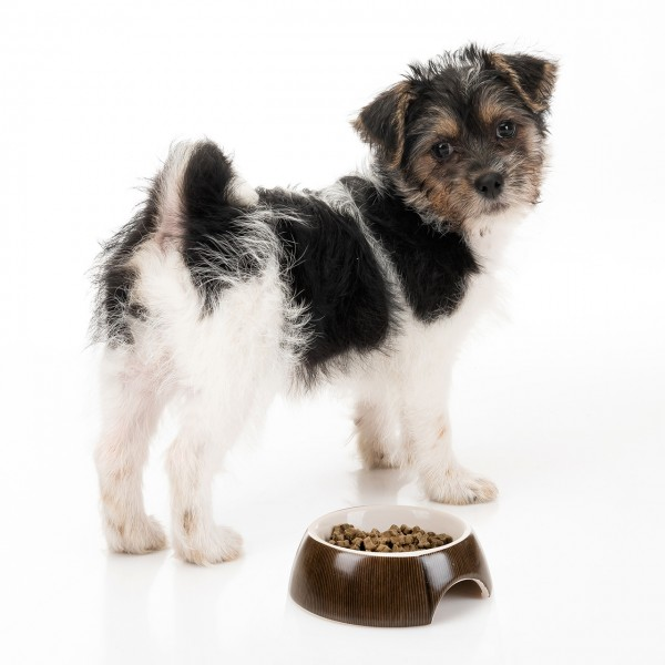 Keramik Fressnapf 10 cm für Hunde & Katzen