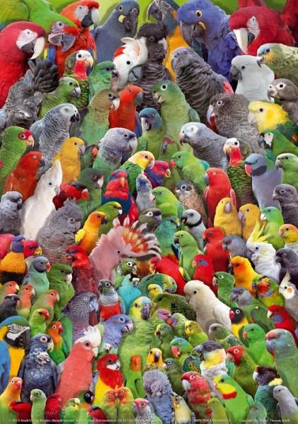 Poster Papageien der Welt 800x600 XL-Format auf Hochglanzpapier