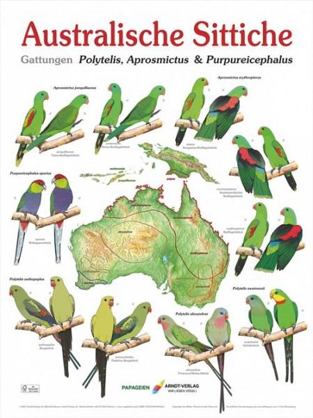 Poster Australische Sittiche plus Australienkarte 800x600 XL-Format auf Hochglanzpapier
