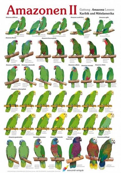 Poster Amazonen 2 800x600 XL-Format auf Hochglanzpapier